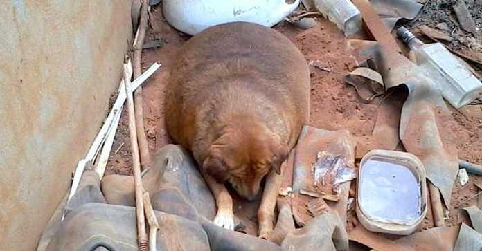 Bezdomny pies przez 13 lat leżał przy drodze. Przechodnie traktowali go jak rozrywkę