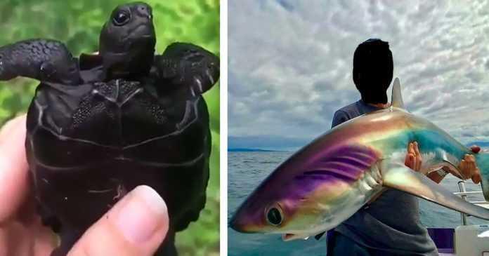 30 zwierzaków o bardzo dziwnych i nietypowych kolorach