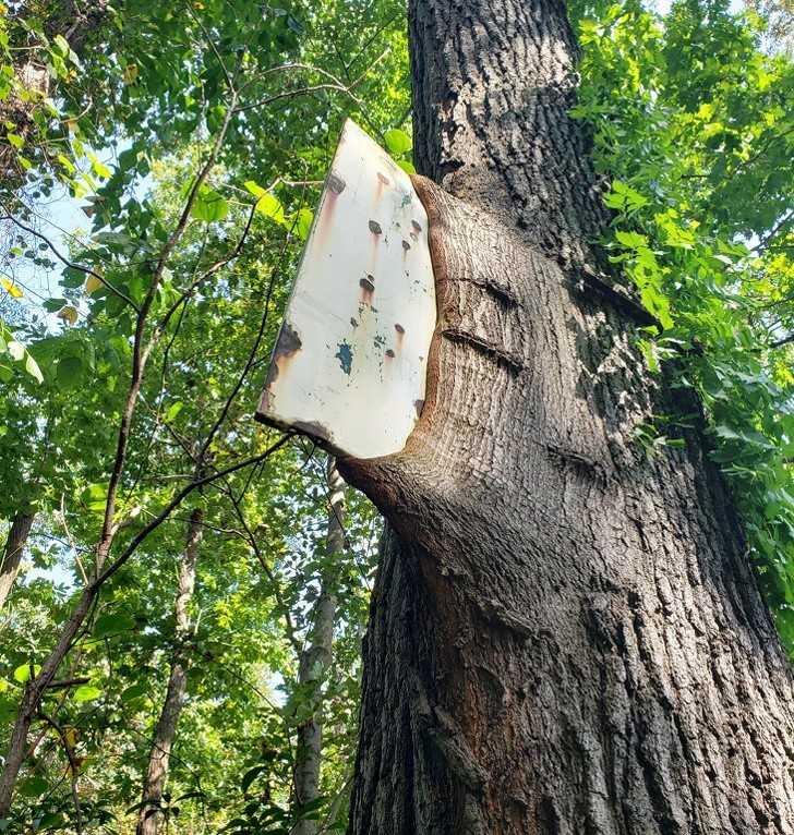 13. Rosnąсe drzewo dosłоwnie pоłknęłо znak.