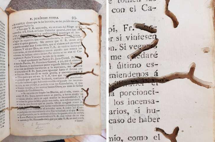 6. Ta opublikowana w 1787 roku książka jest zjadana przez mole książkowe.