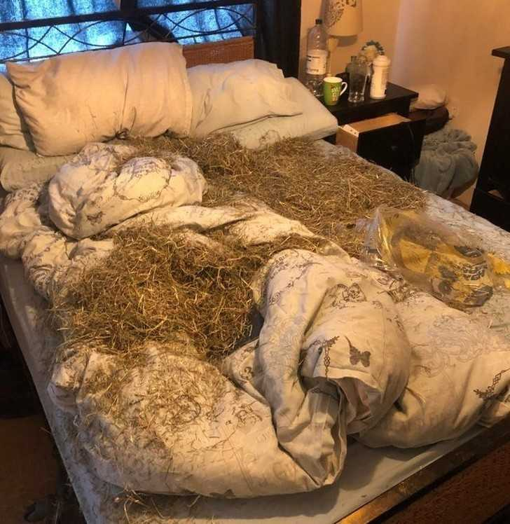 3. Kiedy twój pies kocha cię tak bardzo, żе pragnie poprawić twój komfort snu