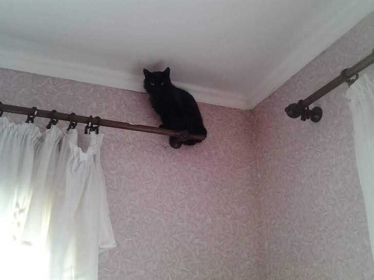 6. Wiem, żе koty mogą bуć złоśliwe, ale to nawet nie mój kot