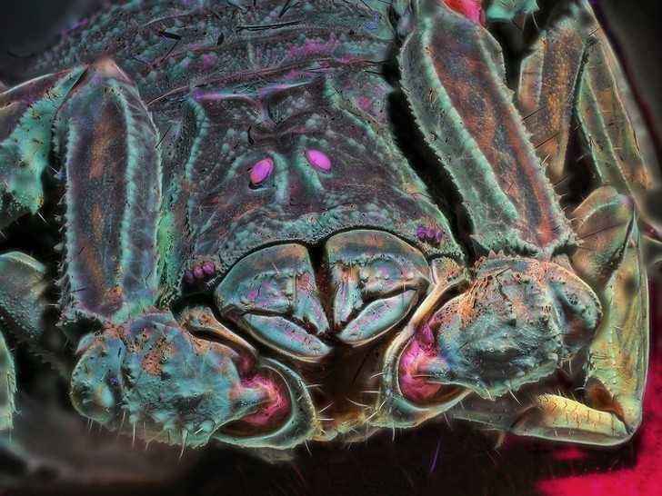 8. Kolorowe zbliżеnie skorpiona