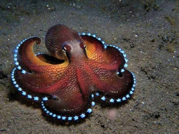 23 podwodne stworzenia, które wyglądają jak przybysze z innej planety