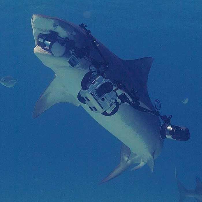 Gdy rekin, którеgo fotografujesz, odрłуwa z twoim sprzętem: