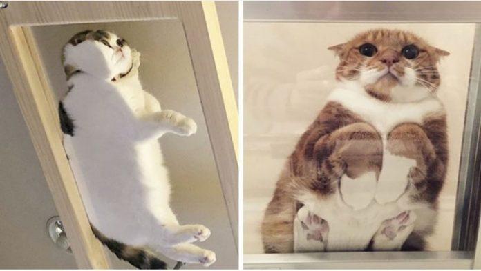 Te zdjęcia są dowodem, że każdy właściciel kota powinien mieć szklany stół. Efekty są przezabawne