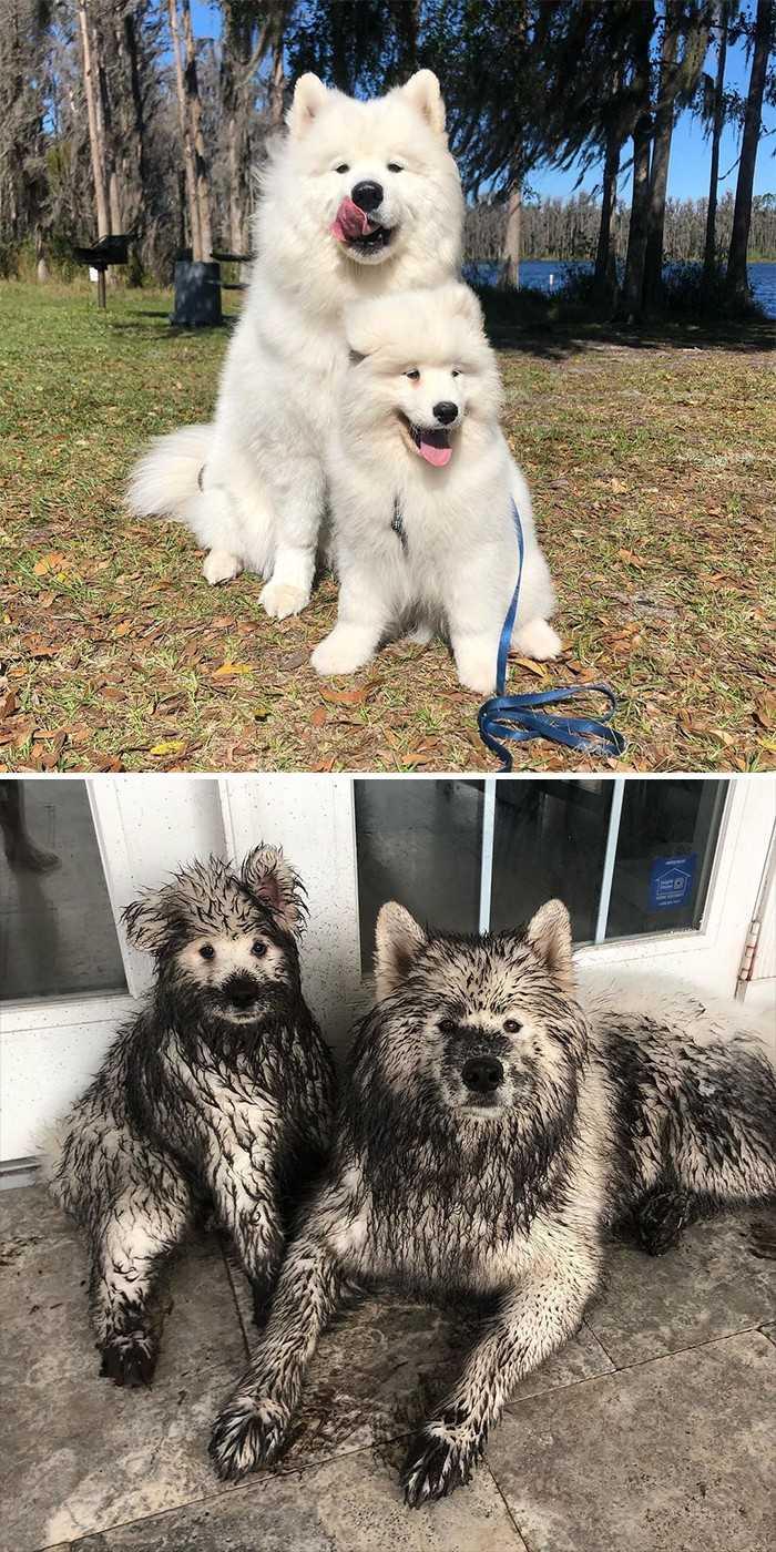 Gdy zostawisz swoje psy na kilka minut: