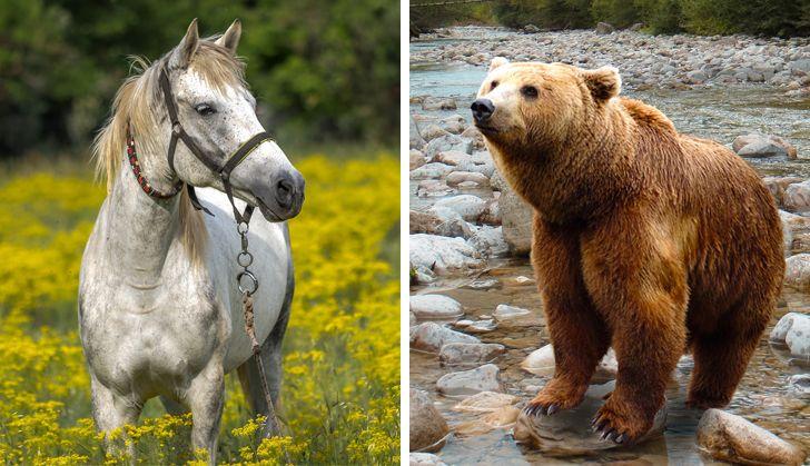 16 tajemnic zwierzaków, których nikt by się po nich nie spodziewał