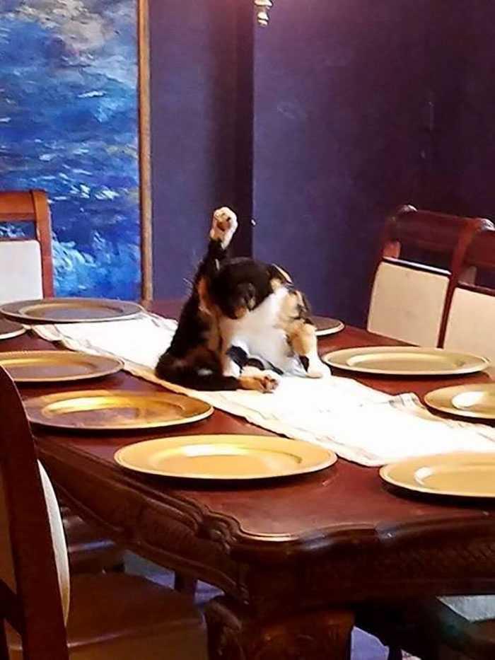 Kot na stole